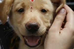 kutyakozmetikus-tanfolyam