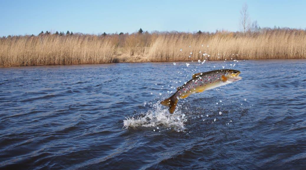 Halász, haltenyésztő képzés