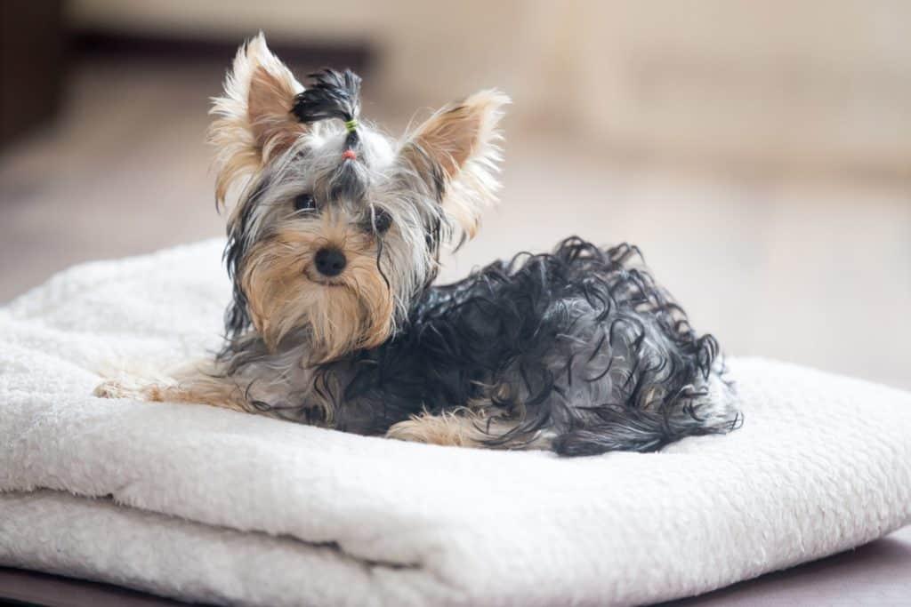 házhoz menő kutyakozmetikus szolgáltatás