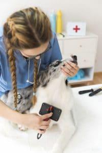 Háztól-házig kutyakozmetika