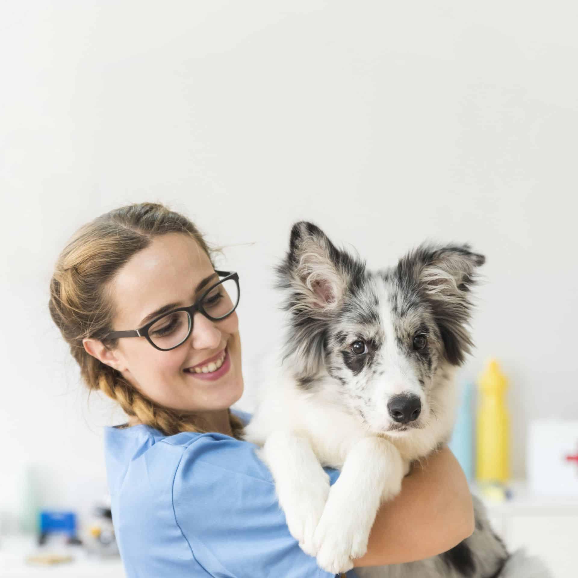 Sikeres kutyakozmetika