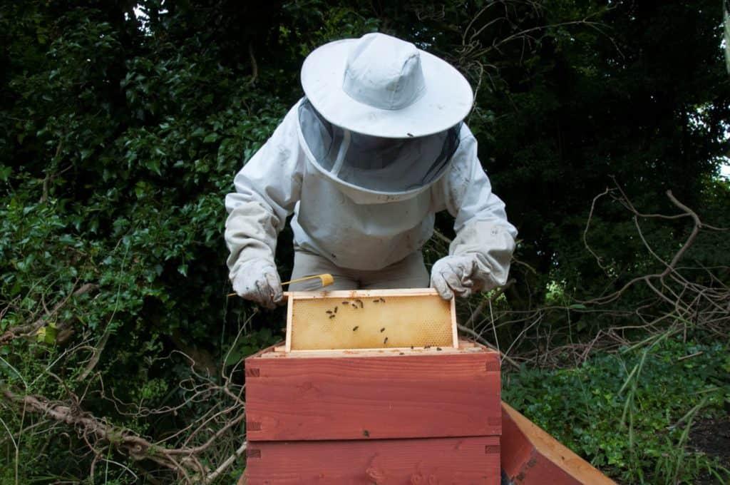 Méhészek és az ő csodatermékeik 5