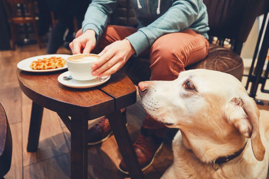 kutyabarát kávézók és éttermek