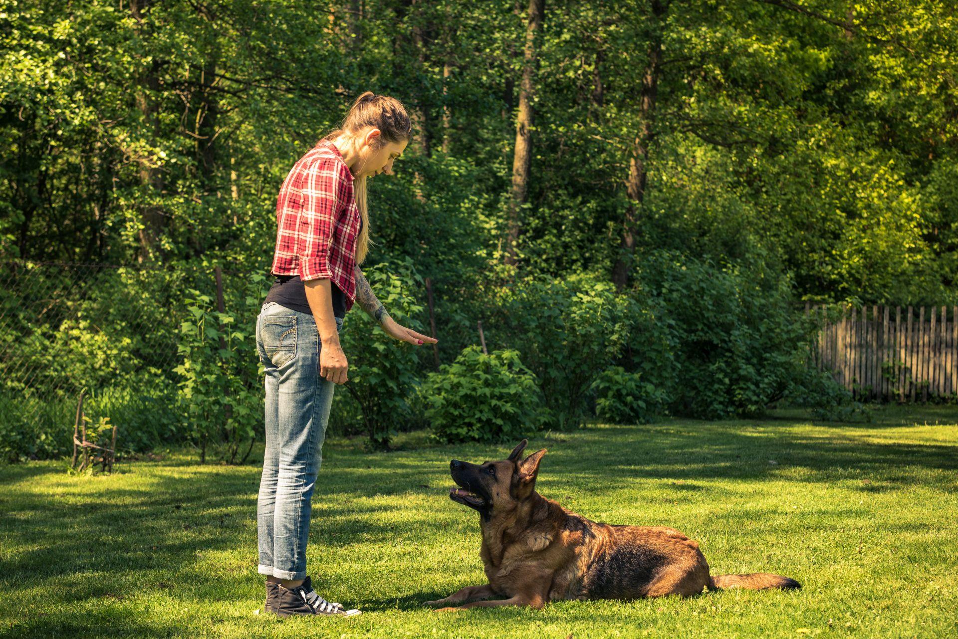Kutyakiképző munkája - jólnevelt ebek