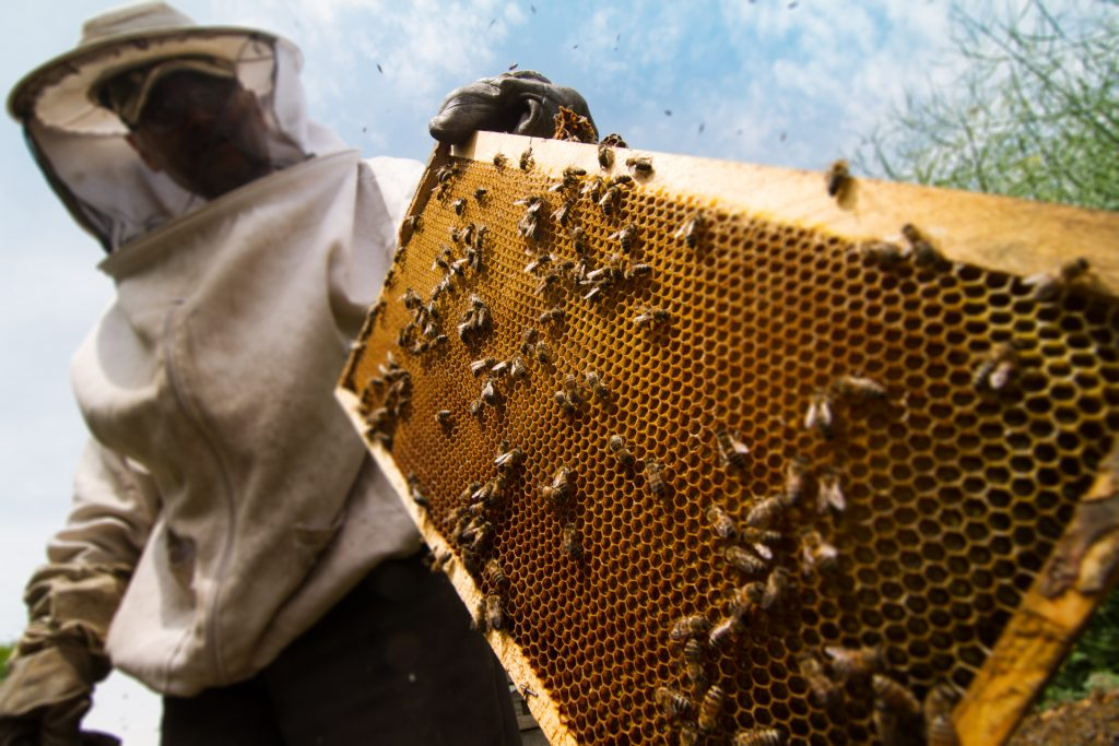 Méhész - állatbarát OKJ képzés