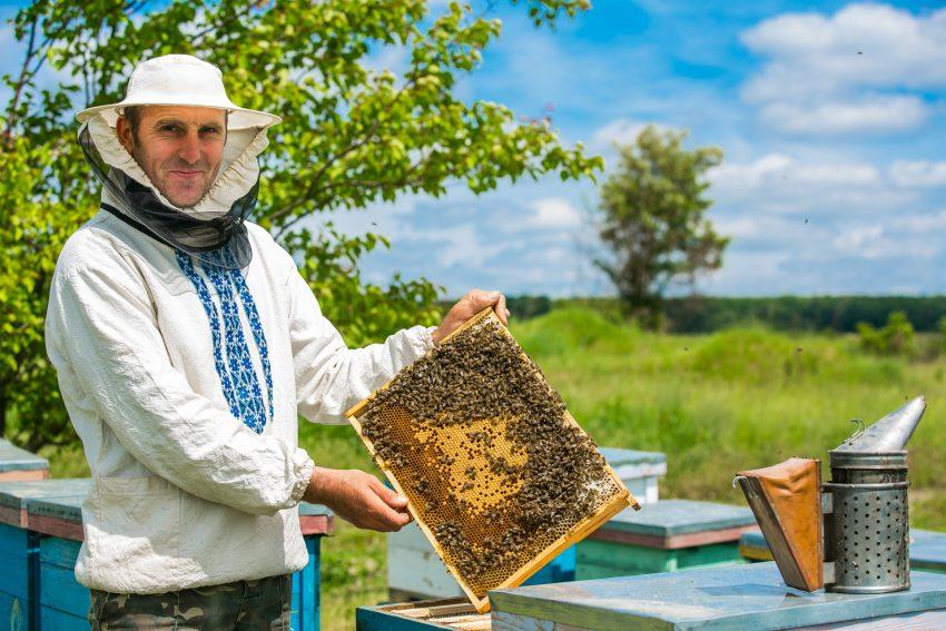 Méhész, a legédesebb méz ismerője