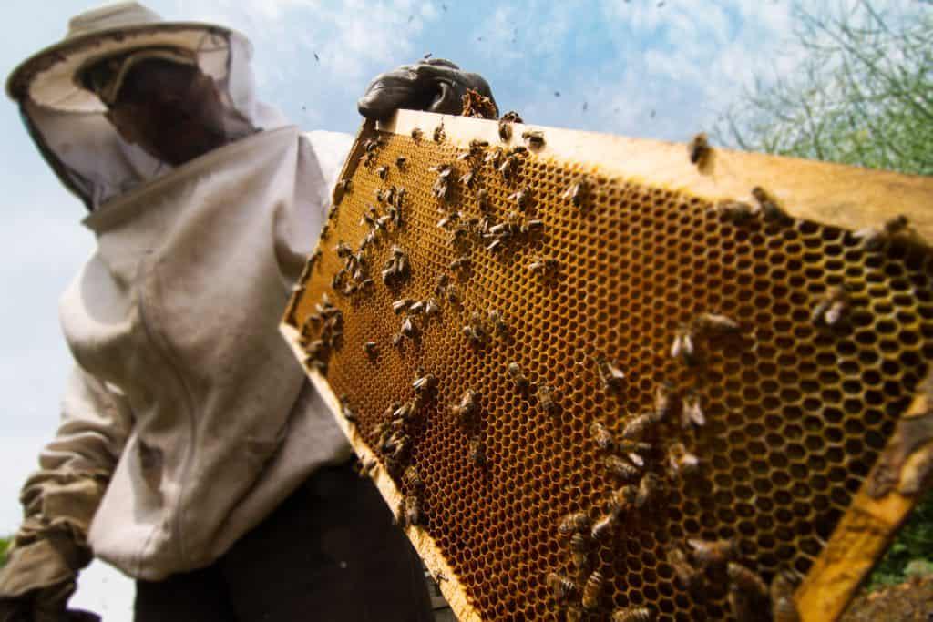 Méhész szakképesítés