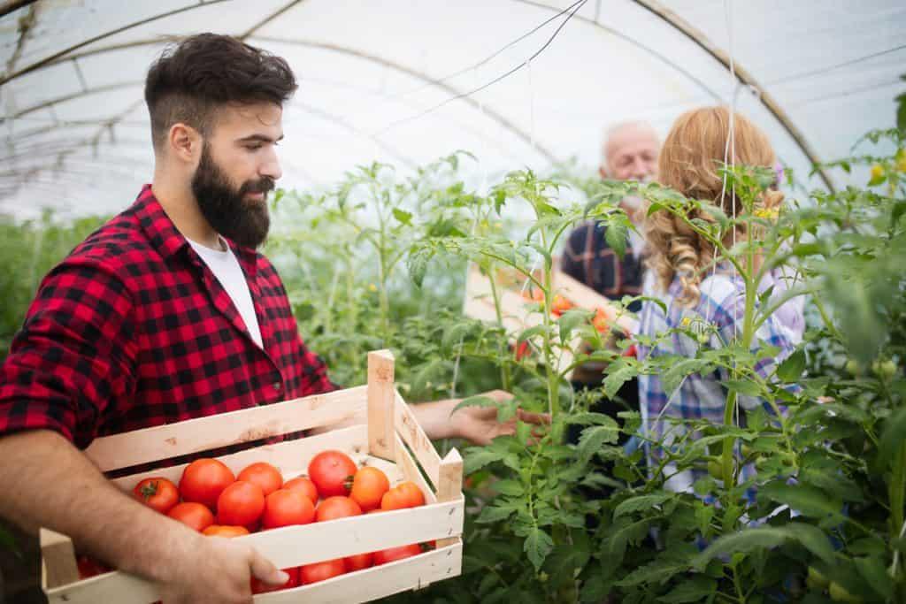 Zöldség- és gyümölcstermesztő szakképesítés