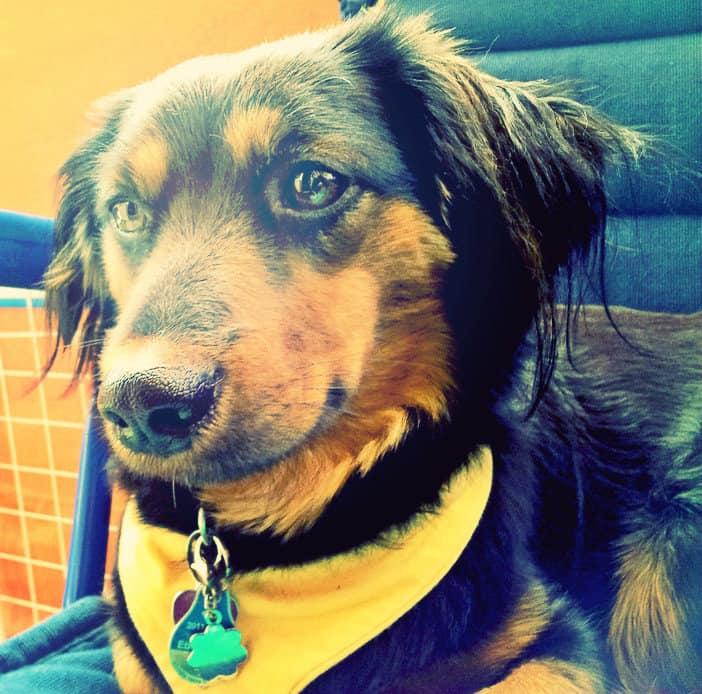 kutyakozmetikus-tanfolyam-budapest-2