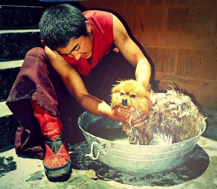 kutyakozmetikus-tanfolyam-budapest-1