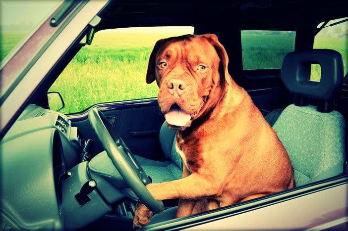 kutyakikepzo-tanfolyam-budapest-1