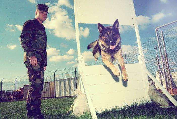kutyakikepzo-tanfolyam-budapest-3