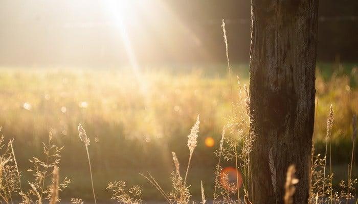Ha szeretnél gazdálkodással foglalkozni, akkor az Aranykalászos gazda OKJ tanfolyam Neked való!