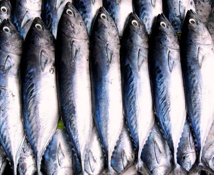 Ha csatlakoznál Magyarország halpiacához, akkor válaszd a Halász, haltenyésztő tanfolyamot!