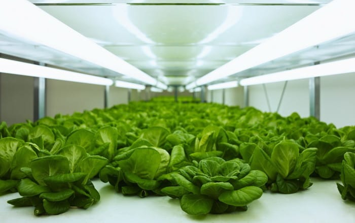 Ha szívesen foglalkoznál növénytermesztéssel, akkor válaszd a Kertész és Zöldség- és gyümölcstermesztő tanfolyamot!