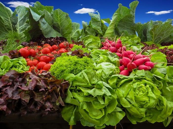 Ha szeretnéd gyümölcstermő növények termesztéstechnológiai feladatait ellátni, akkor a Kertész és Zöldség- és gyümölcstermesztő OKJ tanfolyam Neked való!