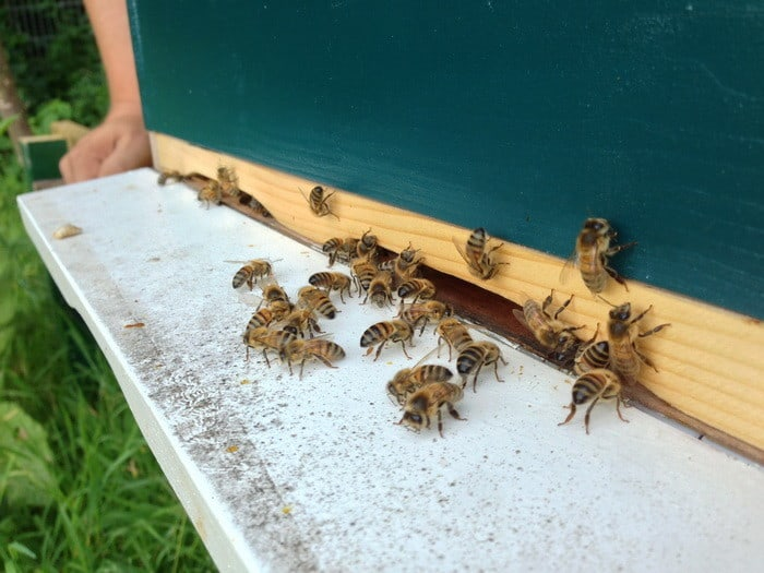 MOST Jelentkezz a celldömölki OKJ-s Méhész tanfolyamunkra, mert sikeres vizsgázás után segítünk az ÁLLÁSKERESÉSBEN!