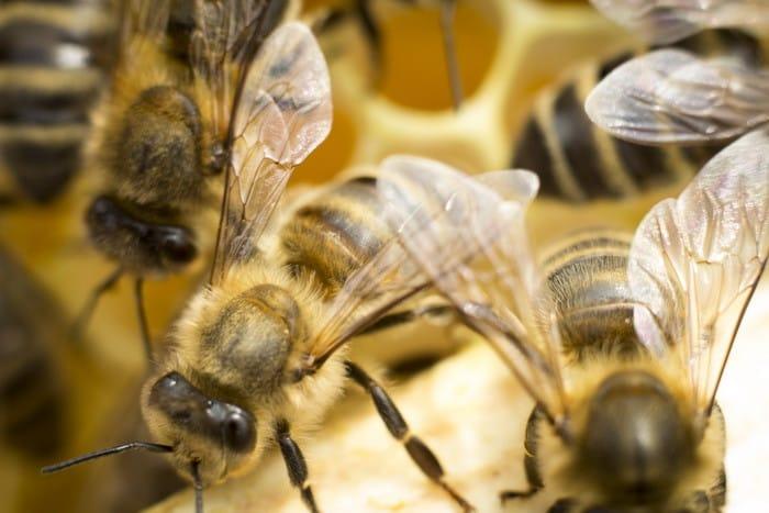 Ha érdekel az állattenyésztés, akkor válaszd a győri Méhész tanfolyamot!