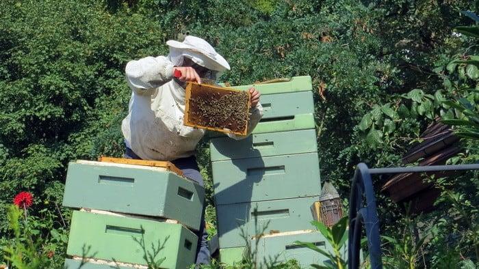 Ha szívesen végeznél fontos munkát, akkor a Méhész OKJ-s tanfolyam Neked való!