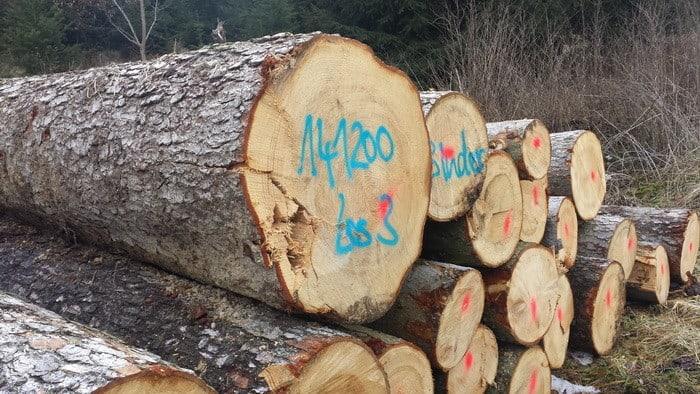 Ha érdekel a fakitermelés, akkor válaszd a Székesfehérváron induló Lakott-területi fakitermelő OKJ-s tanfolyamot!