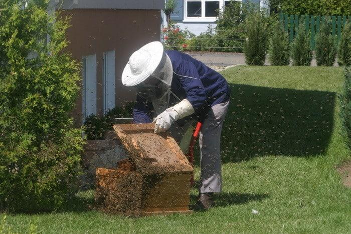 Ha végeznél állattenyésztő munkát, akkor válaszd a Méhész tanfolyamot!