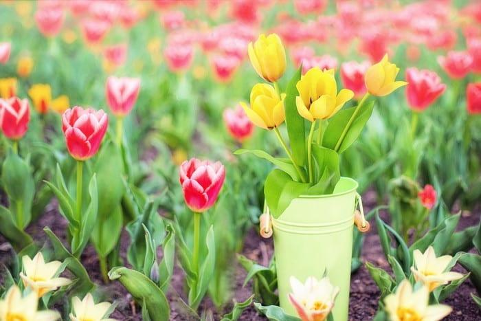 Ha oda vagy a virágokért, akkor válaszd a Kertépítő és -fenntartó OKJ-s tanfolyamot!