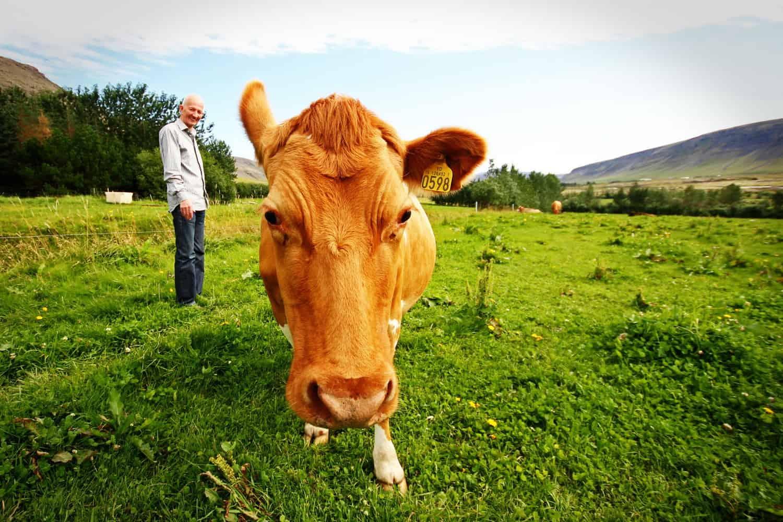 Ha szívesen foglalkoznál mezőgazdasággal és állattenyésztéssel, akkor válaszd az Aranykalászos gazda OKJ-s tanfolyamot!