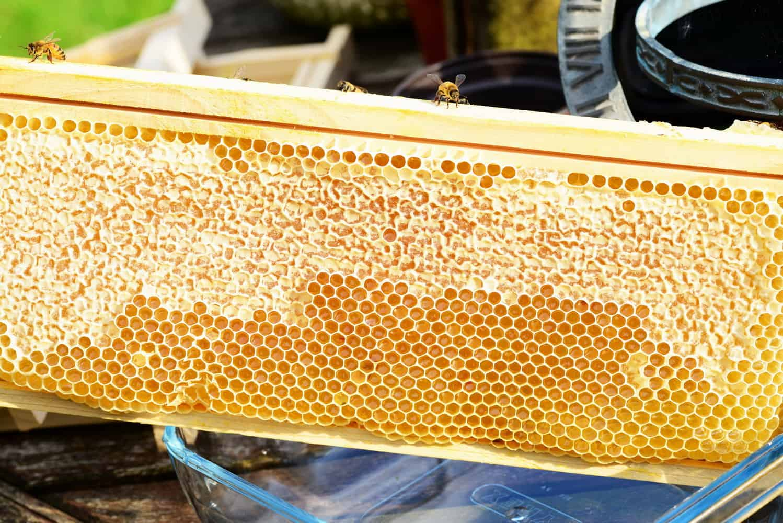 méhész tanfolyam