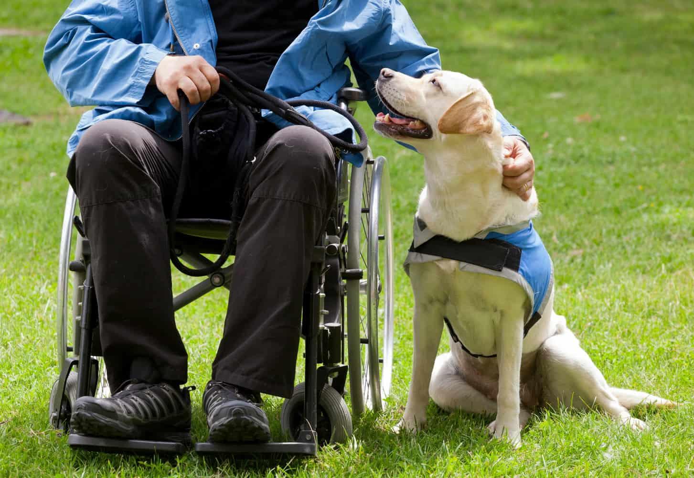 mozgássérültet segítő kutya kiképzője tanfolyam