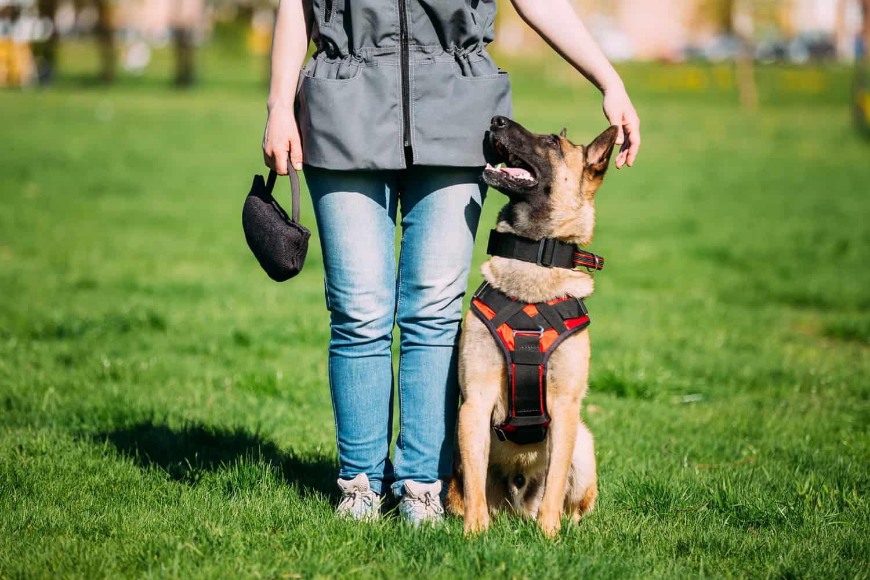 jelző kutya kiképzője tanfolyam